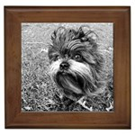 Affenpinscher Gifts, Dog Merchandise, Custom Dog Gift Ideas, Breed Information & Dog Photos