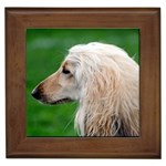 Afghan Hound Gifts, Dog Merchandise, Custom Dog Gift Ideas, Breed Information & Dog Photos