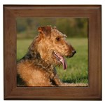Airedale Terrier Gifts, Dog Merchandise, Custom Dog Gift Ideas, Breed Information & Dog Photos