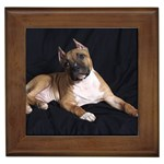 American Staffordshire Terrier Gifts, Dog Merchandise, Custom Dog Gift Ideas, Breed Information & Dog Photos