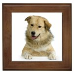 Anatolian Shepherd Gifts, Dog Merchandise, Custom Dog Gift Ideas, Breed Information & Dog Photos