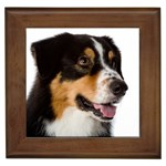 Australian Shepherd Gifts, Dog Merchandise, Custom Dog Gift Ideas, Breed Information & Dog Photos