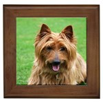Australian Terrier Gifts, Dog Merchandise, Custom Dog Gift Ideas, Breed Information & Dog Photos