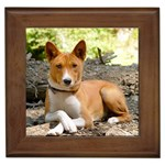 Basenji Gifts, Dog Merchandise, Custom Dog Gift Ideas, Breed Information & Dog Photos