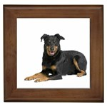 Beauceron Gifts, Dog Merchandise, Custom Dog Gift Ideas, Breed Information & Dog Photos