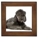 Bedlington Terrier Gifts, Dog Merchandise, Custom Dog Gift Ideas, Breed Information & Dog Photos