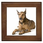 Belgian Malinois Gifts, Dog Merchandise, Custom Dog Gift Ideas, Breed Information & Dog Photos