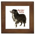 Border Collie Gifts, Dog Merchandise, Custom Dog Gift Ideas, Breed Information & Dog Photos