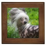 Chinese Crested Gifts, Dog Merchandise, Custom Dog Gift Ideas, Breed Information & Dog Photos