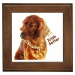 Irish Setter Gifts, Dog Merchandise, Custom Dog Gift Ideas, Breed Information & Dog Photos