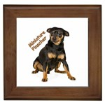 Miniature Pinscher Gifts, Dog Merchandise, Custom Dog Gift Ideas, Breed Information & Dog Photos