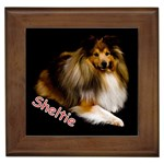 Shetland Sheepdog Gifts, Dog Merchandise, Custom Dog Gift Ideas, Breed Information & Dog Photos