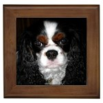 English Toy Spaniel Framed Tile