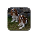 English Toy Spaniel Rubber Square Coaster (4 pack)